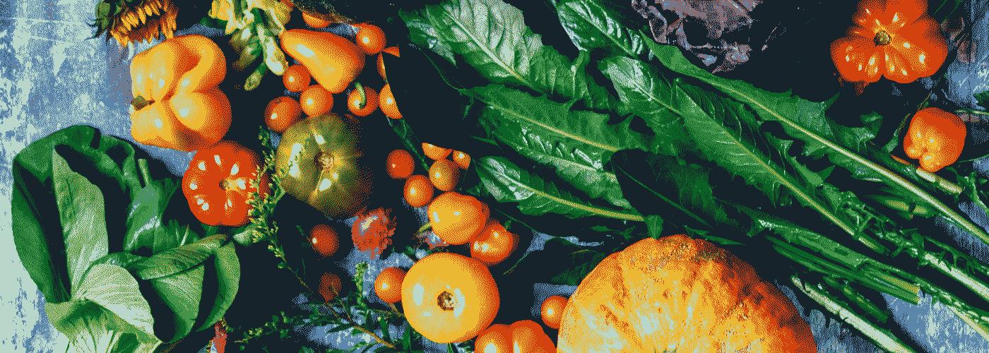 Ferme Solidaire Écolieu Lacoste : fond légumes
