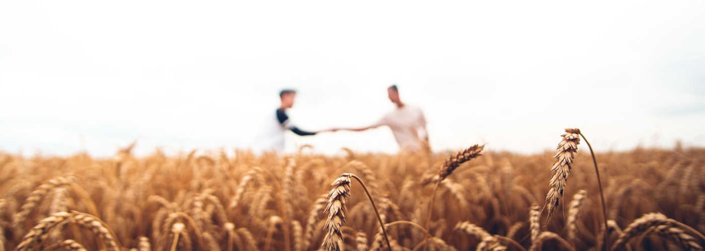 fond blé